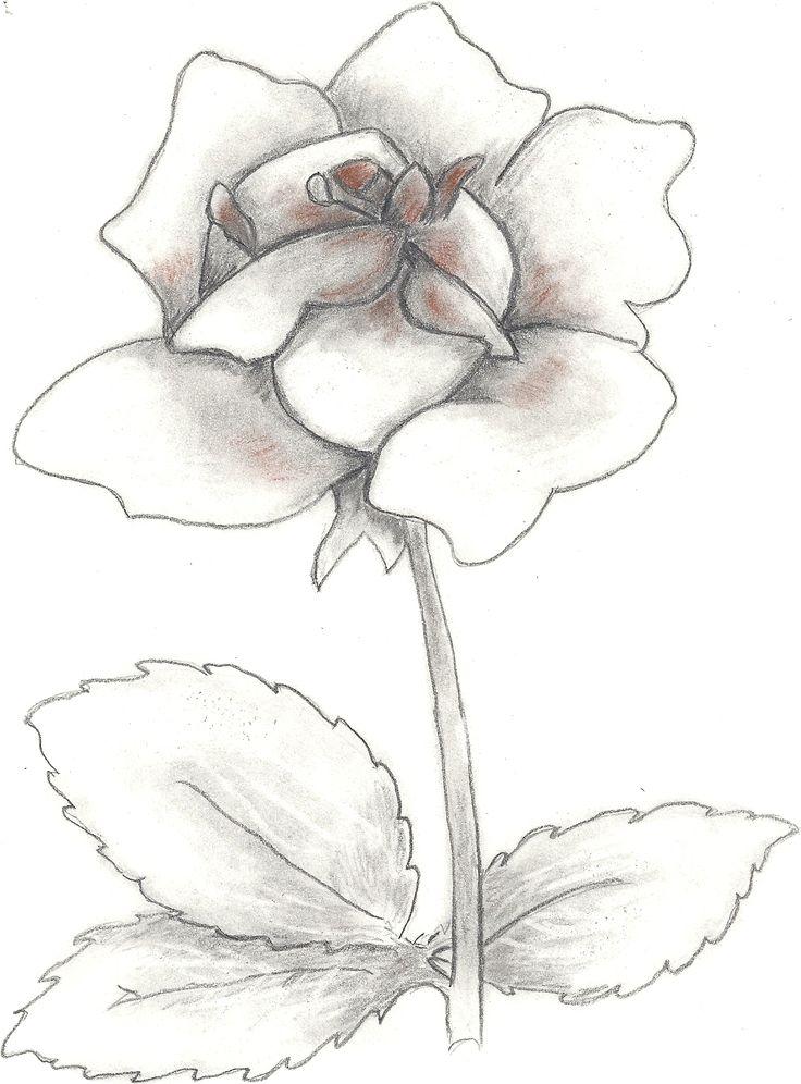 rózsa - grafit
