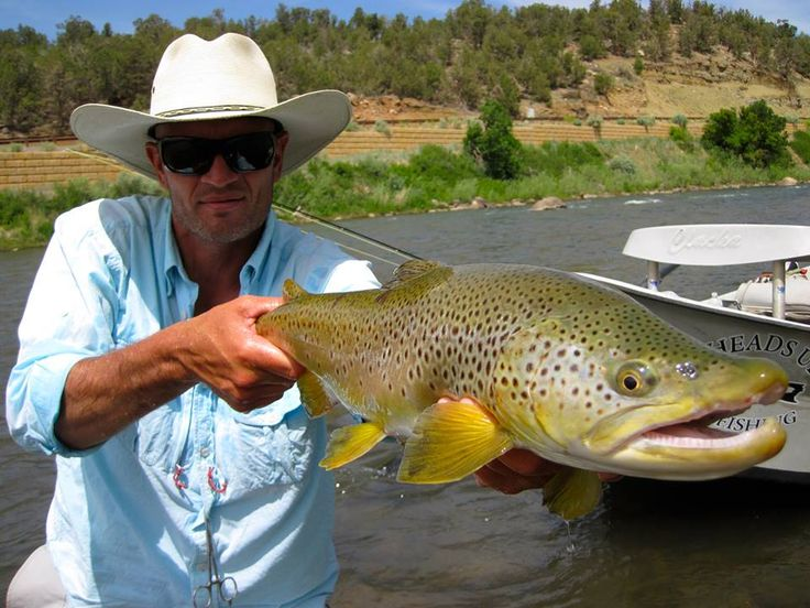 80 best images about big fish on pinterest utah durango for Best fly fishing in colorado