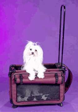 (click twice for updated pricing and more info) Pet Carrier - Pet On Wheels Airline Approved Pet Carrier - Small Purple #pet_carriers http://www.plainandsimpledeals.com/prod.php?node=48917=Pet_Carrier_-_Tutto_Pet_On_Wheels_Airline_Approved_Pet_Carrier_-_Small_Purple