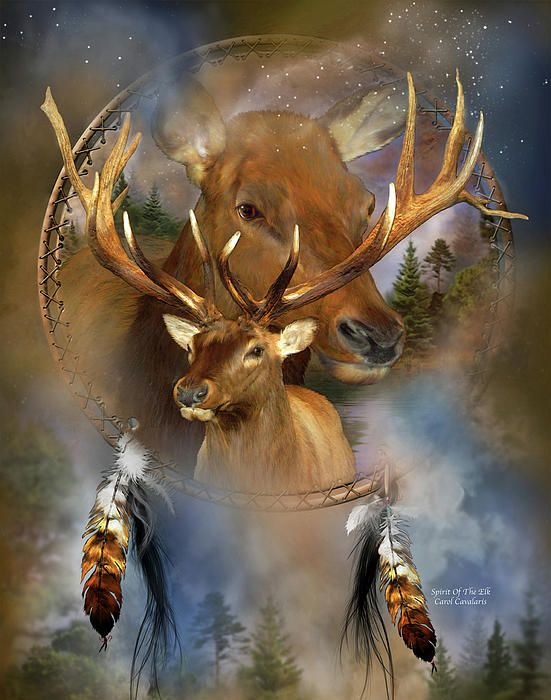 Spirit Of The Elk by Carol Cavalaris. Prints available at Fine Art America. Nobel elk, symbol of strength, survival, and stamina. Observer of subtle energies. The message of the Elk is to pace yourself, to remain calm and confident to reach your goals. The spirit of the Elk is one of community and the power and joy of unity. This painting of a bull elk with giant antlers, with a female elk behind, both within a dream catcher, is from the Dreamcatcher collection by Carol Cavalaris.