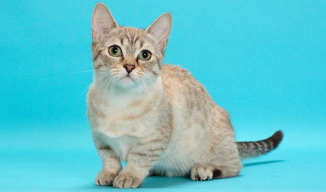 kitten upper respiratory infection treatment