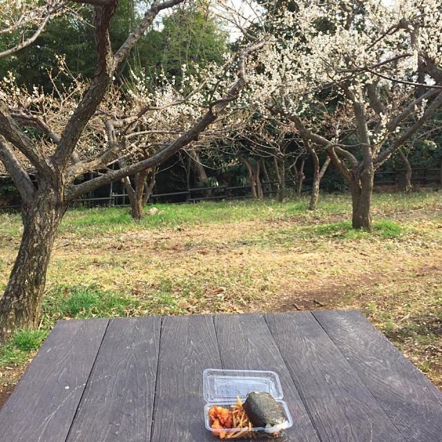 たまには外で近所にたまたま見つけた公園で☺️時間を忘れます - 59件のもぐもぐ - 公園ランチ(おにぎり、から揚げ、キンピラ) by tabajun