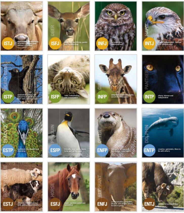 animal mbti chart