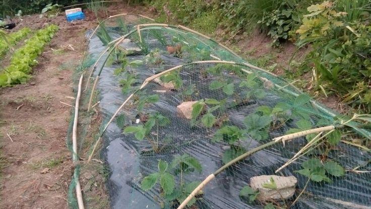 1000 id es sur le th me support plante grimpante sur for Plante decorative jardin