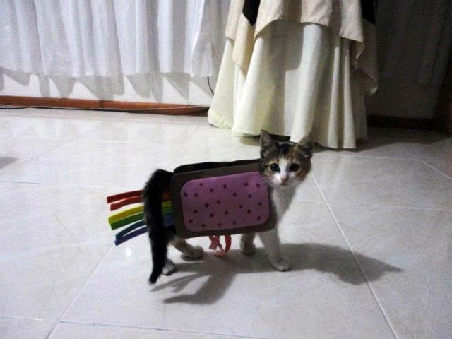 I love Nyan Cat! via fanpop Nyan Cat forum