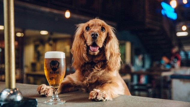 This Colorado Dog Trainer Specializes In Teaching Dogs Brewery