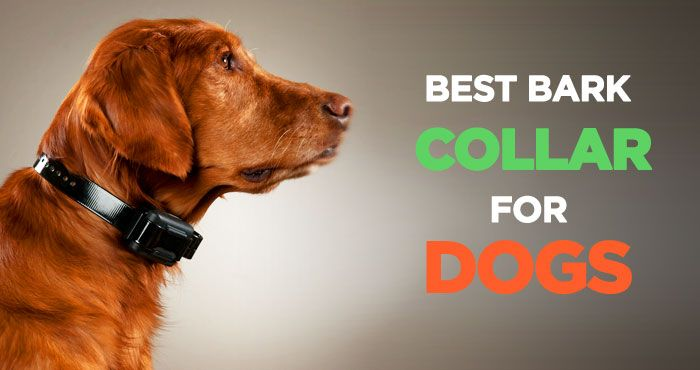 Best Bark Collars: Reviews & Buyers Guide to Stop Excessive Barking http://peanutpaws.com/best-bark-collars/  #dogs #collar #barkcollar #ecollar #doglovers #petcare #dog #doghealth #training