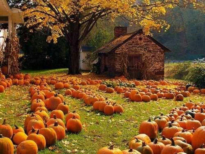 .Pumpkin picking!