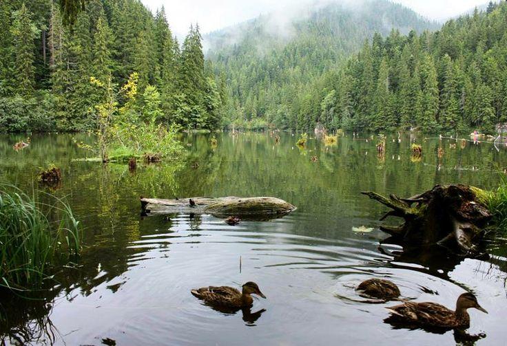 Gyilkos tó - Hagymás-hegység - Székelyföld - Erdély  fotó Szárszó Edit