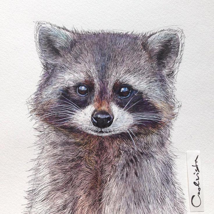 Best 25+ Raccoon illustration ideas on Pinterest | Raccoon ... Raccoon Drawing