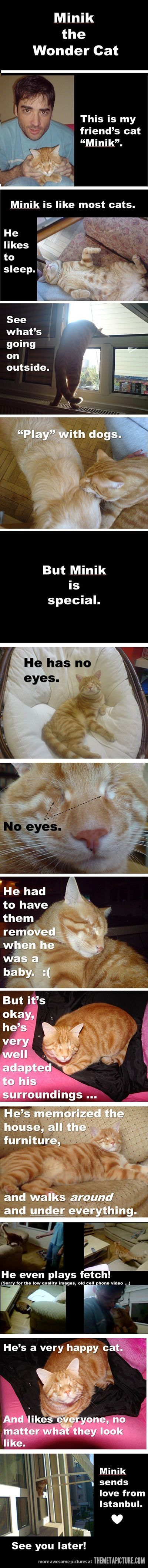 This cat is special…