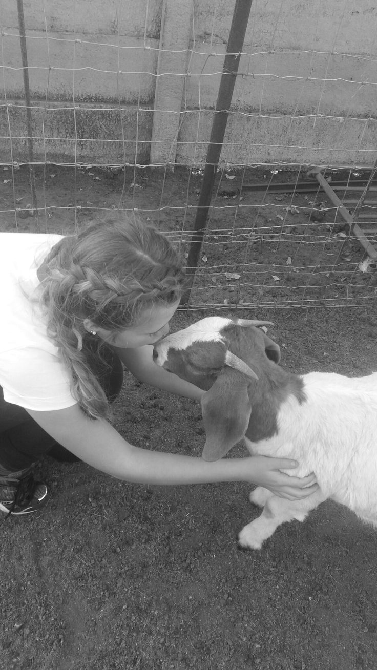 Goat love she is the cutest goat ever