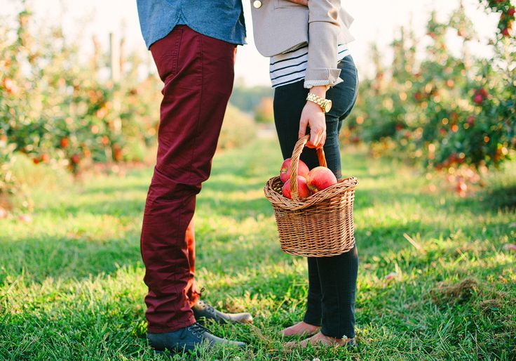 Best Montreal Apple Picking Orchards 2015   MTL Blog