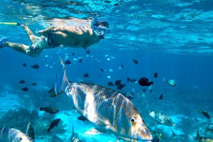 Australia's Coral Coast-Ningaloo Reef, http://www.escapefish.com/destinations/australia/exmouth
