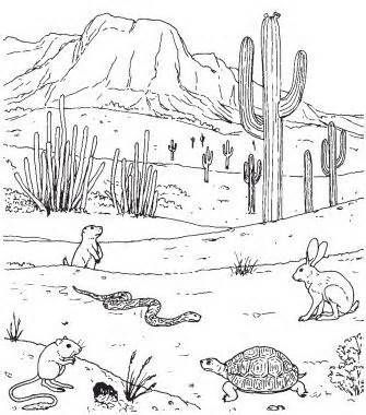 How To Draw Desert Plants Yahoo Image Search Results