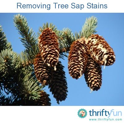 This is a guide about removing tree sap from just about anything. Tree sap can get on anything from clothing to your car.