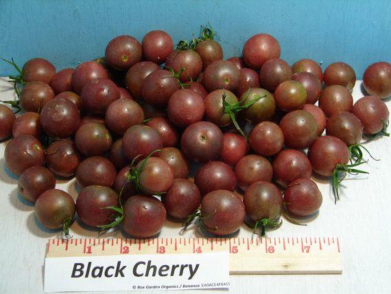Black Cherry Tomato Seeds Organic Heirloom by BoxGardenOrganics