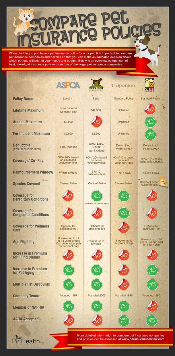 Compare Pet #insurance Policies[INFOGRAPHIC]