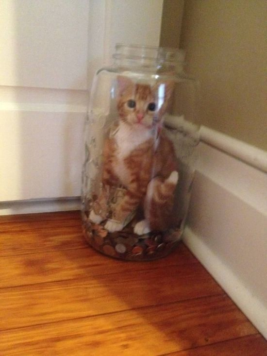 This cat who was trying to steal money and got caught: | 19 Cats Who Made Poor Life Choices: