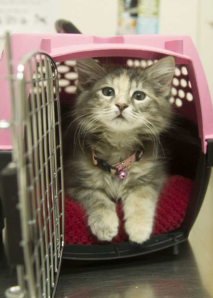 Moving with Pets - Pet Transport QLD  Moving can be difficult sometimes. How much if you are moving with your furry bestfriend. Aeropets Animal Transport offers Pet Transportation services. Pet Transport QLD and Pet Transport NSW is the best choice.