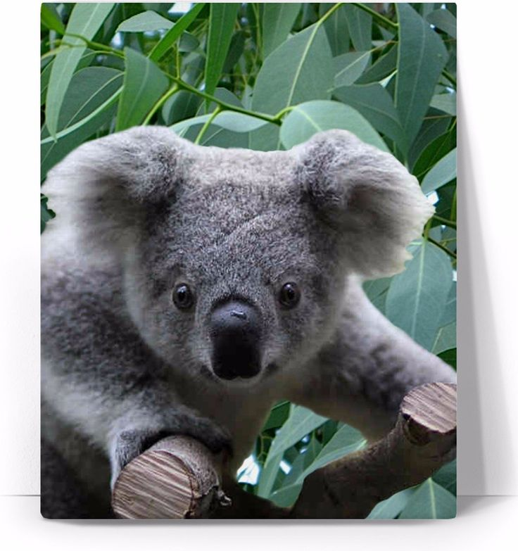 Check out my new product https://www.rageon.com/products/koala-and-eucalyptus-art-canvas-print?aff=BWeX on RageOn!