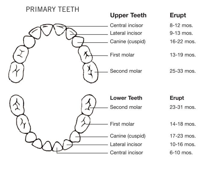Best 25+ Baby teething chart ideas on Pinterest Baby teething - baby teeth chart