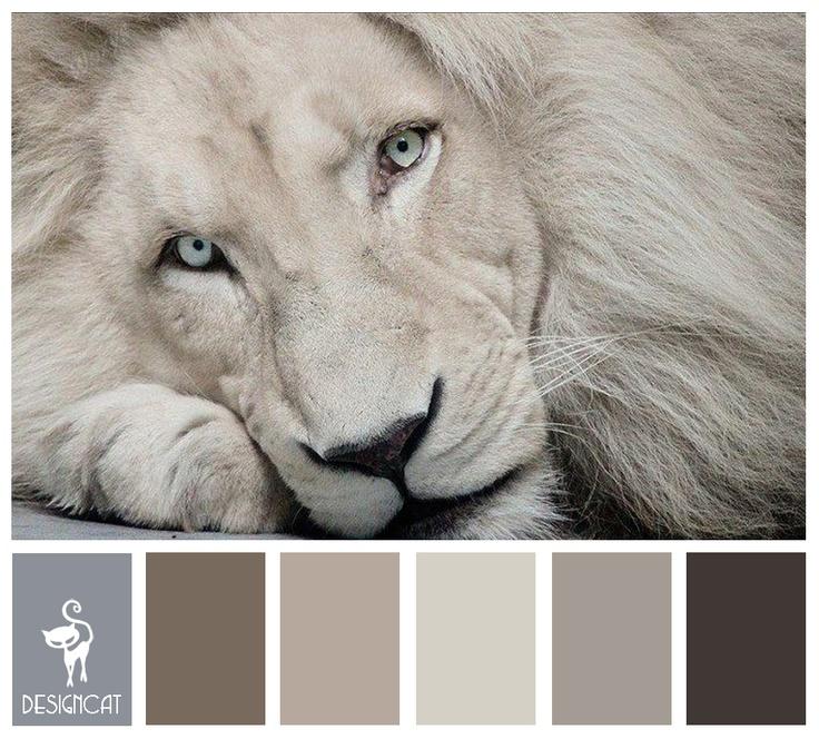 derde t/m vijfde kleur! Albino Lion: Beige, Grey, Stone, Sand - colour inspiration Pallet