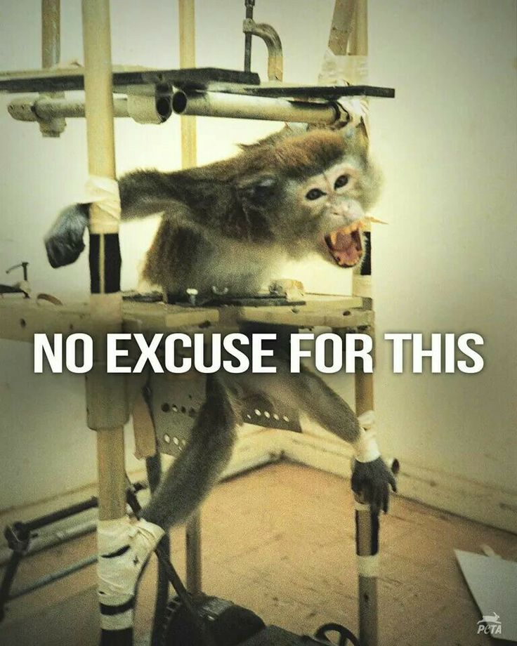 "animals are not ours to abuse Peta states to the world "" animals are not ours to eat, wear, experiment on, use for entertainment, or abuse in any other way""."