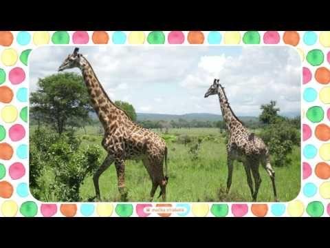 bababoo _ Náuka macka Packa / EXOTICKÉ ZVIERATÁ - YouTube