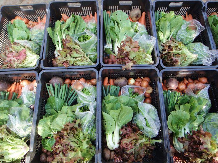 Újra kell tanulnunk a vásárlást! − furcsán hangozhat ez a mondat a szupermarketek korában, azonban a Fogj kezet a termelővel! kampány egyik tanulsága mégis ez volt. Hogyan lehet megkülönböztetni egymástól a biozöldséget és a nagyipari termelésűt? Jó-e nekünk a görbe répa, a...