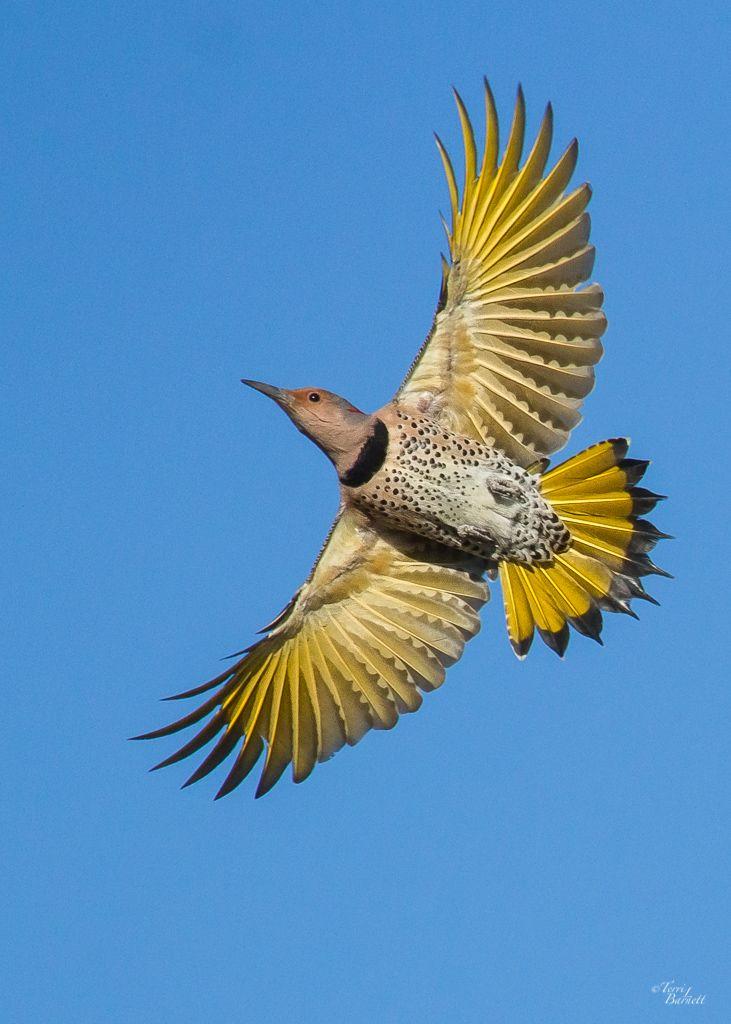 How To Begin Birding | Audubon