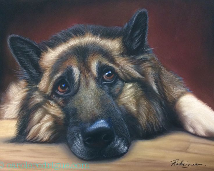 View it larger on my site -German Shepherd in pastels - pet portrait painting by pet portrait artist Carole Rodrigue #dogs #dogart #dogpaintings #pets #petportraits #giftsfordoglovers #petmemorials #petpaintings #petportraitsinoil #realisticdogart #cuteanimals #petportraitartists #animals #animalart #GSD #germanshepherds #germanshepherdlovers #k9 #k9dogs