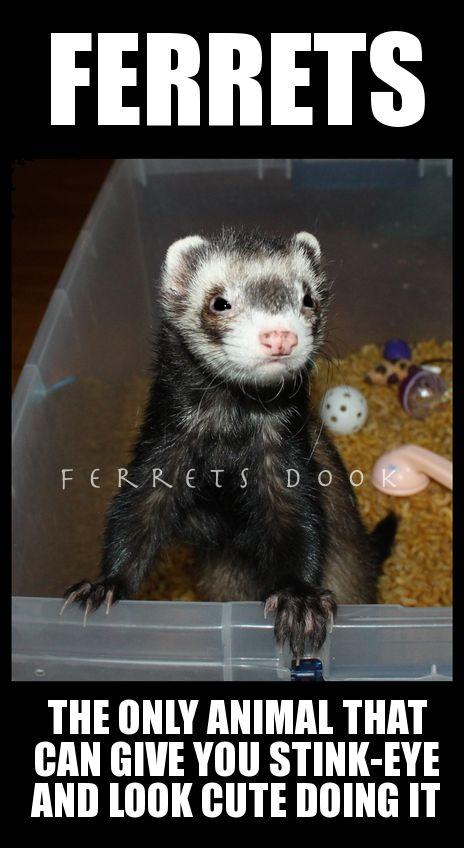#ferrets