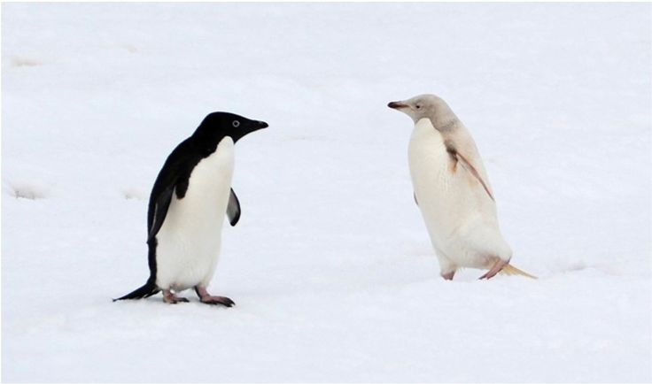 797 best images about ZOO-Pingüinos ️ on Pinterest | Baby ...