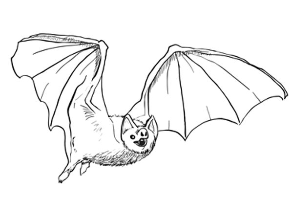 How To Draw A Bat Sketchbook Challenge 27 Step By Drawing Tutorials Ideas In 2019 Drawings Animal