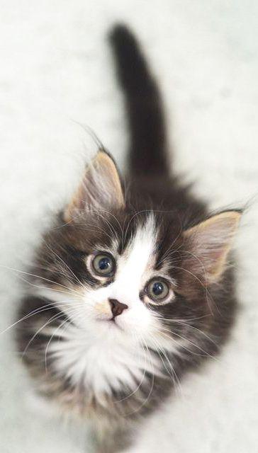 Kitten  [Continue] 6b553028-b131-49ad-b1ad-a7e6d3778e15