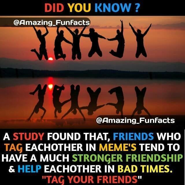 interesting facts about friendship