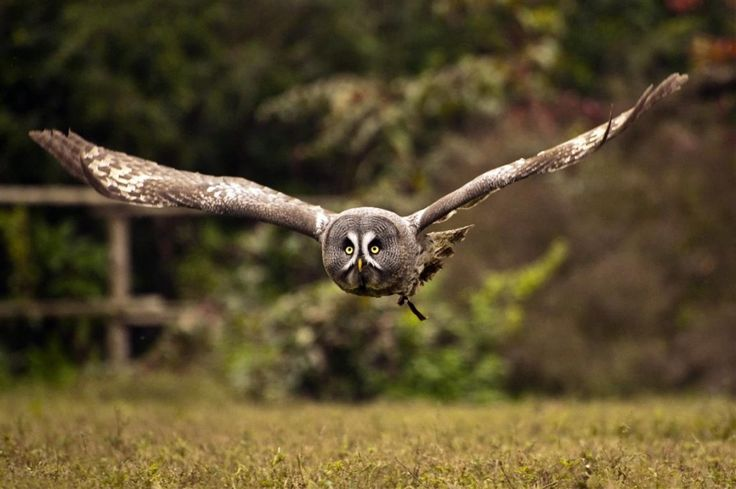 TIRO A VOLO  Consigli e tecniche per riprendere in modo dinamico e suggestivo gli uccelli nel loro elemento, l'aria.