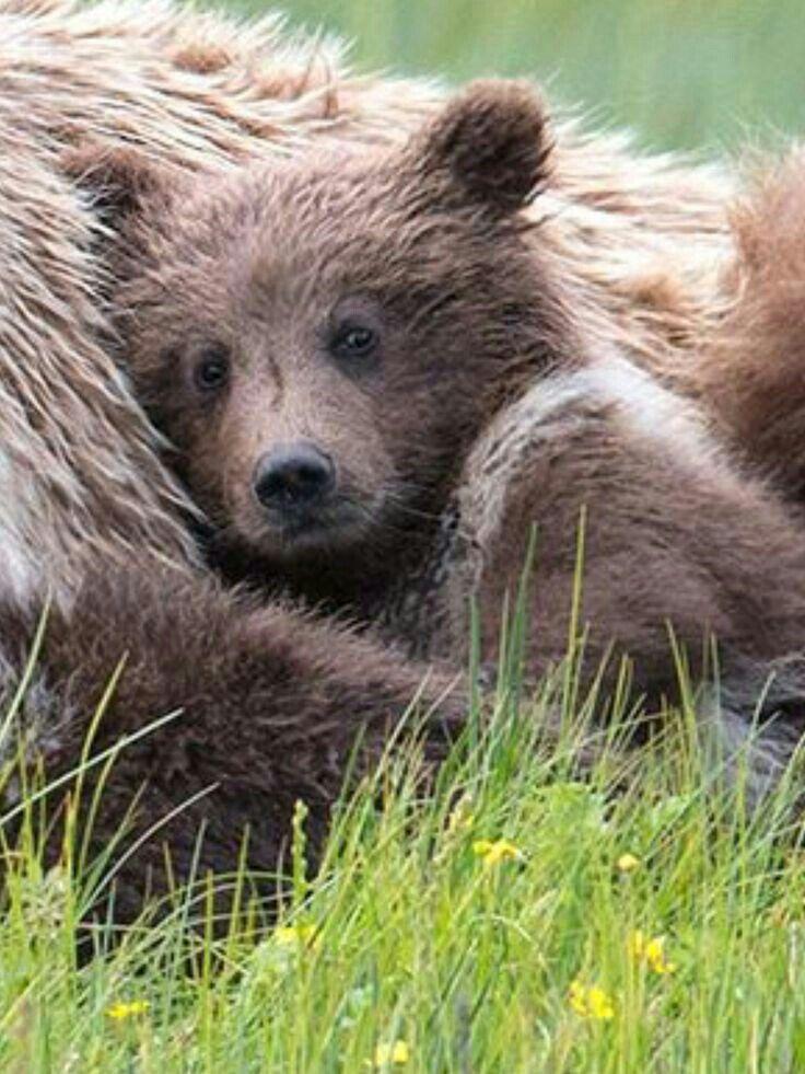Cozy Cuddles!