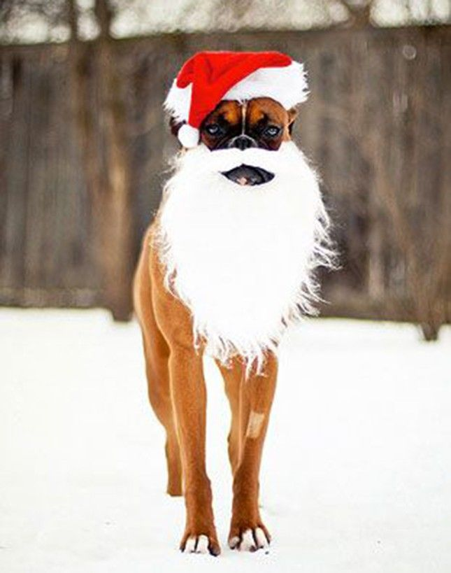 20 Christmas Cards Ideas for Your Pets via Brit + Co