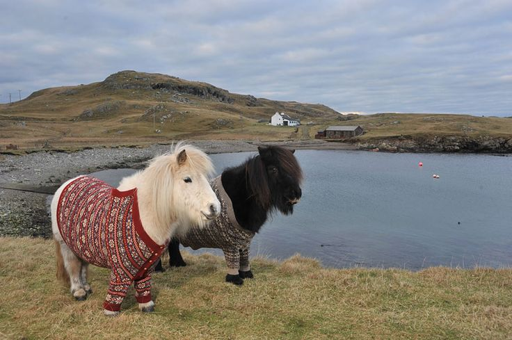 Greatest Marketing Campaign Ever - Lovely Shetland Ponies Dressed in Sweaters to Promote Scotland | Bored Panda