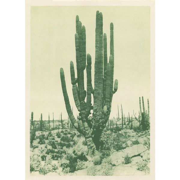 Capricorn Press Saguaro Cactus (green) 11 X 14 By ($25) ❤ liked on Polyvore featuring home, home decor, wall art, posters, cactus poster, cactus wall art, green home accessories, archive poster and cactus home decor