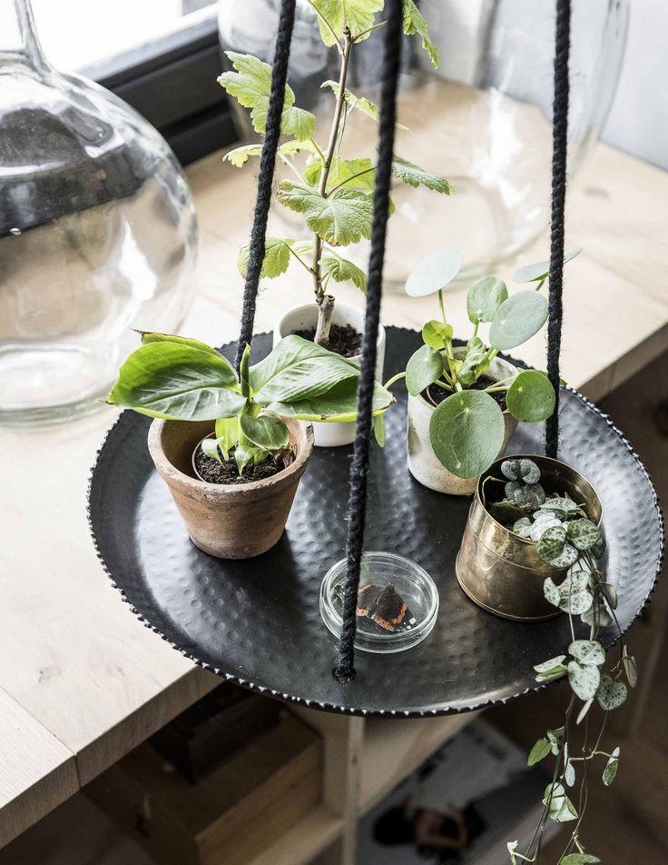 Plantenhanger vtwonen met groene plantjes | Hanging tray vtwonen with green plants | Fotografie Sjoerd Eickmans | Styling Kim van Rossenberg