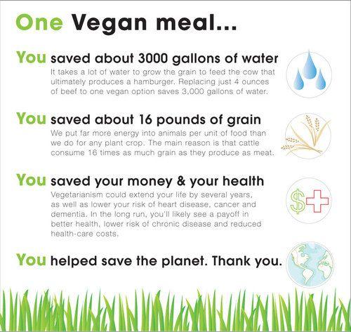 Vegan mealEating Habits, Animal Right, Diet, Food, Make A Difference, Govegan, Go Vegan, Vegan Meals, Vegan Lifestyle