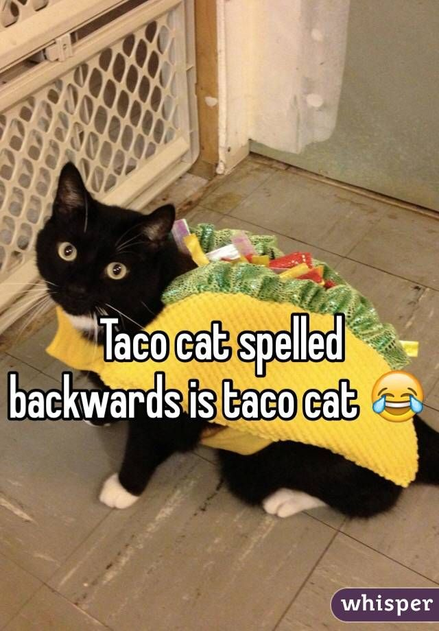 Taco cat spelled backwards is taco cat