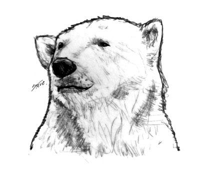 ©®eªRtEmUndOs: Polar Bear