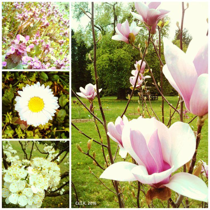Spring Hungary, Gödöllő 2016 by Camilla