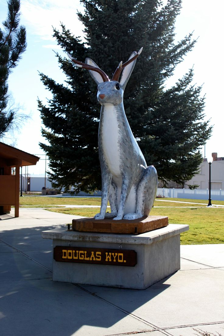 81 best photos of wyld wyoming images on pinterest for Fishing license wyoming