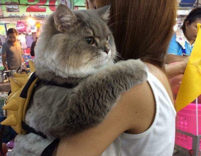 This is the backpack-wearing cat you've been spotting everywhere.