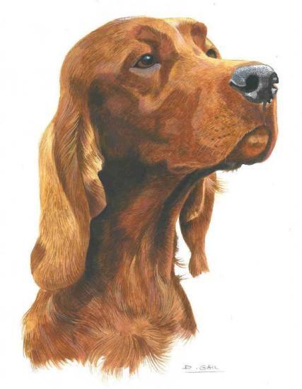 Portrait de chien, Setter Irlandais par Dominique Gall